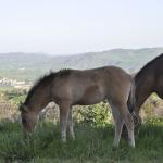 La Vaccariccia show horses